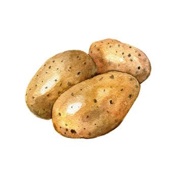Pomme de terre Charlotte – nouvelle récolte