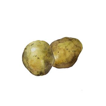 Pomme de terre Grenaille (nouvelle récolte)