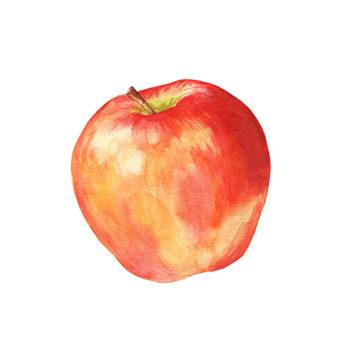 Pomme Gala – Nouvelle récolte