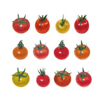 Tomate cerise colorée (mélange)