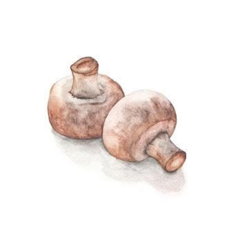 Champignon rosé