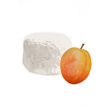 Fromage frais abricot