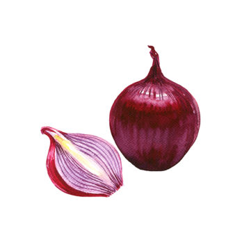 Oignon rouge